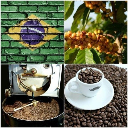 KAWA ZIARNISTA YELLOW BOURBON FAZENDA RAINHA PULPED NATURAL BRAZYLIA WIZARD - PALENIE ŚREDNIO CIEMNE